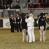 Royal16_Holstein_21M9A0271