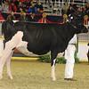 Royal16_Holstein_21M9A0214