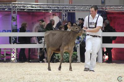 RWF Jersey Heifers 2016