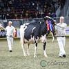Royal2017_Holstein-6212