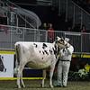 Royal2017_Holstein-4457