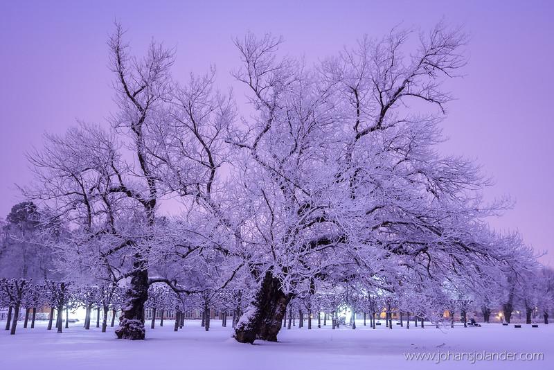 Haga Palace Park
