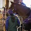 K-State senior Shana Barnett grooms a horse during the Equestrian meet against Texas A&M at Timbercreek Stables in Manhatthan, Kansas on October 5, 2013.