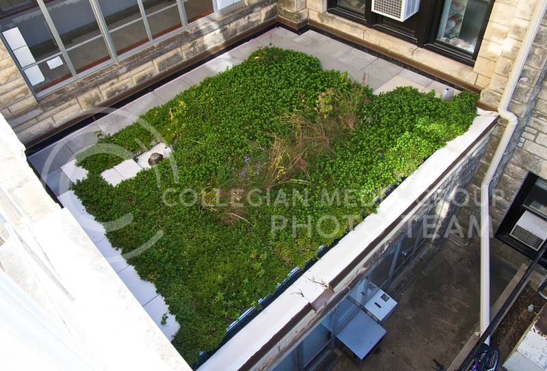 The lower green roof was installed in the spring of 2012 and provides a shaded environment compared to the full-sun conditions of the upper green roof.