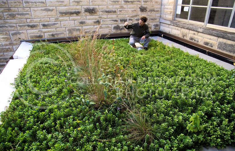 Dr. Lee Skabelund, a professor in the Department of Landscape Architecture and the primary coordinator of the K-State green roof project, measures the amount of rainfall that fell on the lower green roof at Seaton Hall.