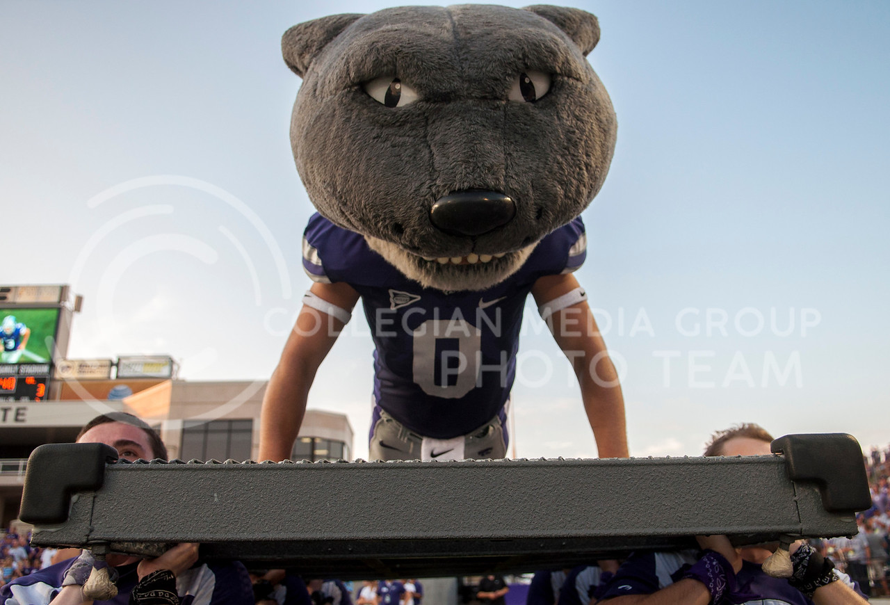 Willie performs touchdown push-ups at the KSU vs UL game on Sept. 7, 2013. Photo by Hannah Hunsinger   Royal Purple