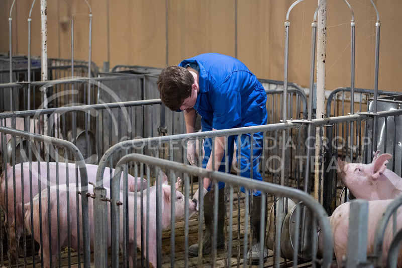 Dawson Burnett, Junior Biology-BS, Pre-Veterinary Medicine lives at the K-State Swine Unit. His main duties consist of pumping waste, power washing, filling feeders, giving shots to the pigs, and maintenance jobs. (Dylan Connell | Collegian Media)