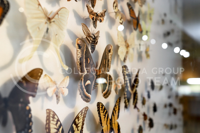 A display case of different butterfly species. (Monica Melber | Collegian Media Group)