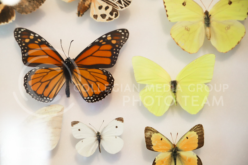 A variety of butterfly species on display at the Insect Zoo. (Monica Melber | Collegian Media Group)