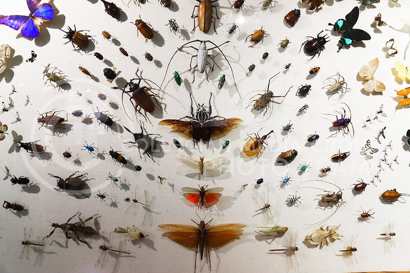 A framed arrangement of insects at the Insect Zoo. (Monica Melber | Collegian Media Group)