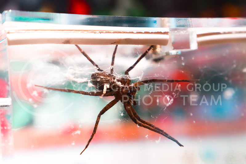 A giant arachnid in a glass case at the Inect Zoo. (Monica Melber | Collegian Media Group)