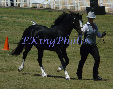 Royal Shows