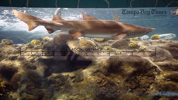 TBT Zoom Bkgrnd Shark