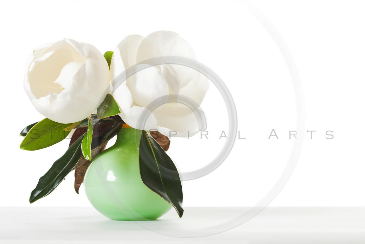 Magnolia Flowers Floral Magnolias Green Vase White Table