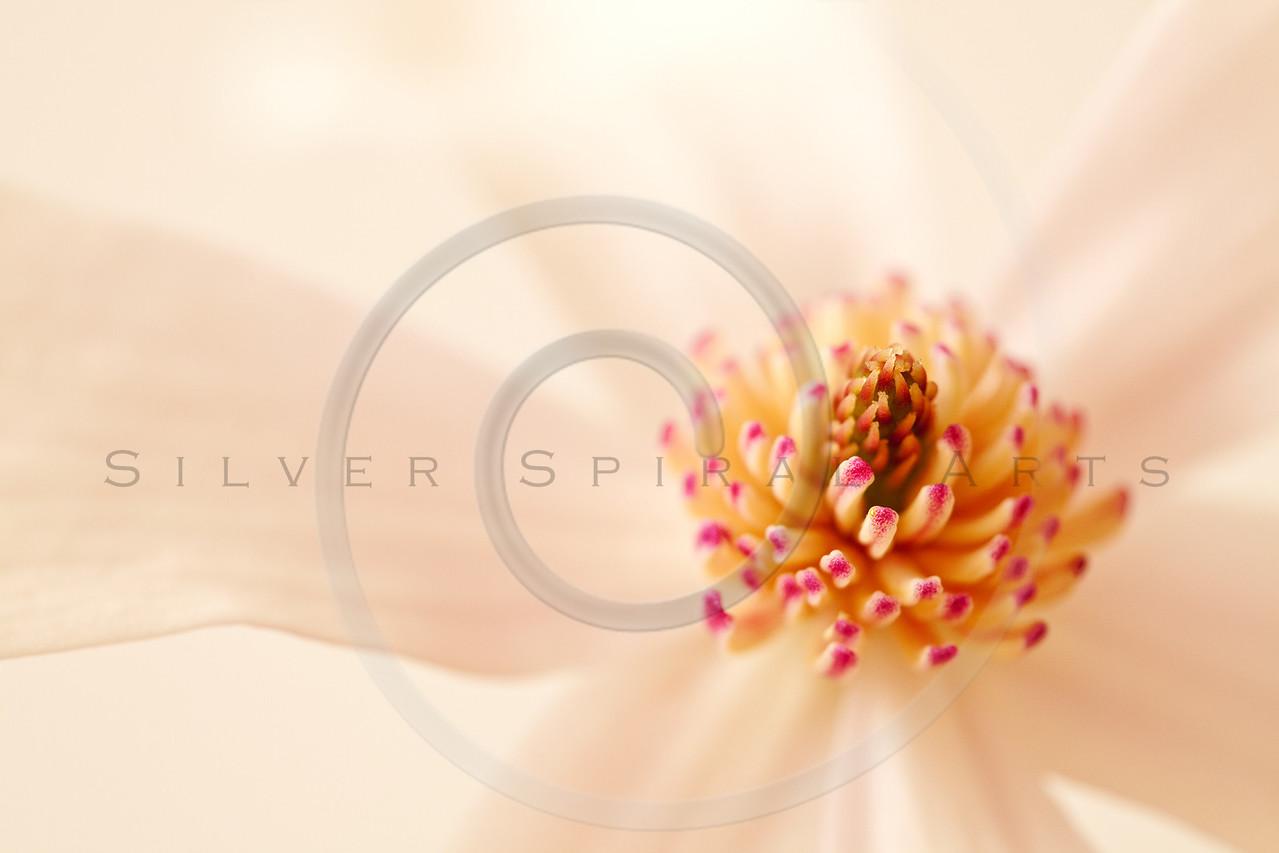 Spring Magnolia Blossom