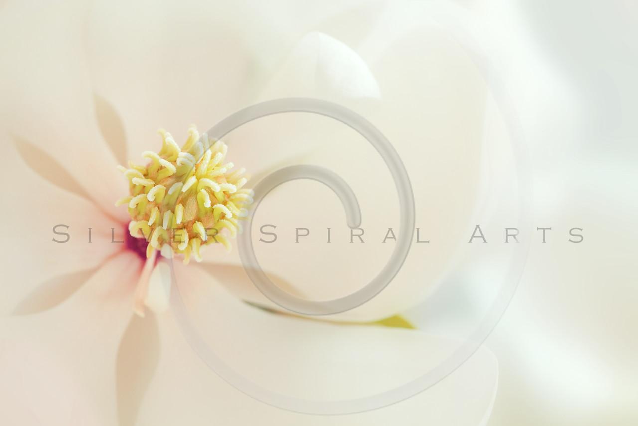 White Magnolia Flower High Key Tropical Floral