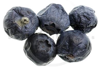 moldy blueberries
