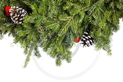 Christmas Evergreen decoration isolated on white.