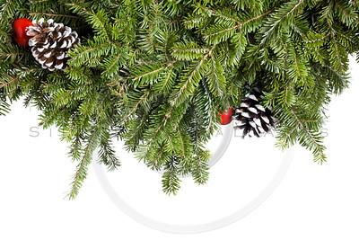 Christmas Evergreen decoration isolated on white.