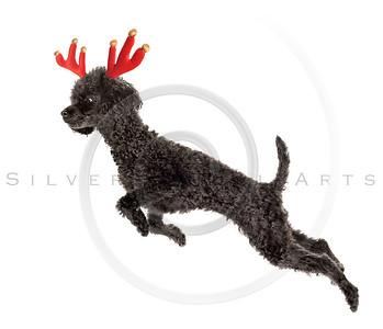 Rudolf the Black Nosed Reindeer.