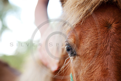 girl's hand on miniature horse filly