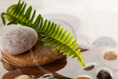 green fern leaf on river rocks in water