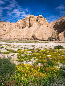 Qumran Caves with flowers