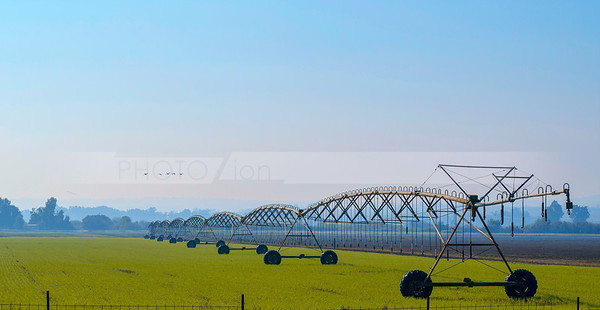 Hula Valley irrigation