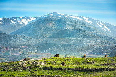 Mount Hermon and the Golan Heights