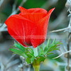 Flower among thorns