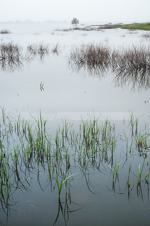 Misty morning on the lake; Galilee Israel