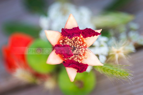 Pomegranate Star of David