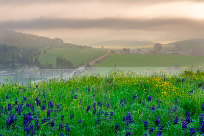 Satellite dishes and flower fields - Valley of Elah