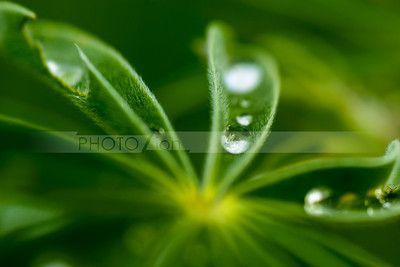 Raindrop on a leaf