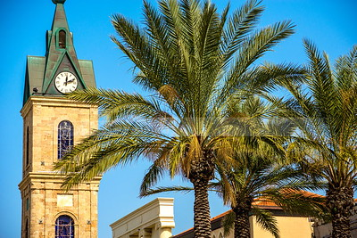 Jaffa palm trees with clock tower in the background