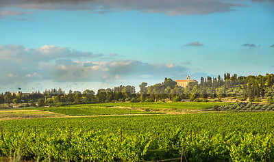 Latrun and vinyards of Ayalon valley