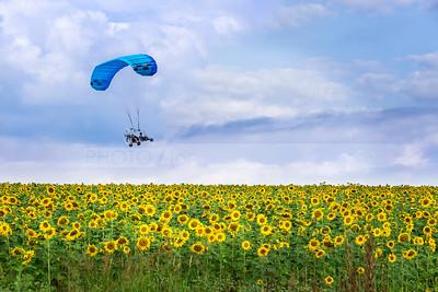 Powered parachute over sunflower field