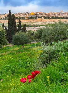 Jerusalem view from Mount of Olives with red anemone flowers