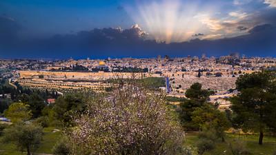 Jerusalem sunset with almond tree