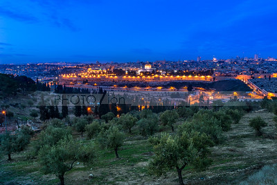 Olive Grove and the Old City