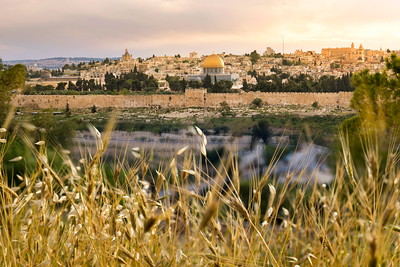 Shavuot time: Old City Jerusalem with barley and oats