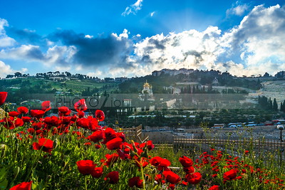 Mount of Olives with red poppies in the foreground