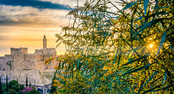 Sun shining through blossoming tree, with walls of Jerusalem in the background
