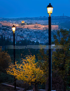 Fall tree with view of the Old City and Mount of Olives