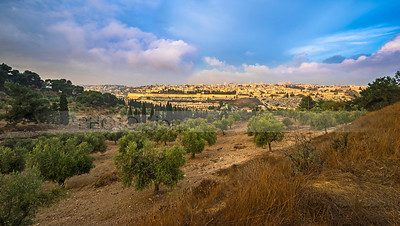 View of Jerusalem with olive trees