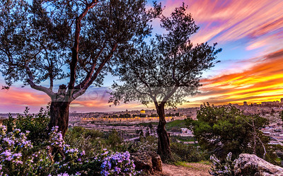 Dramatic sunset over Jerusalem, through the trees of Mount of Olives