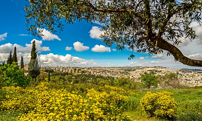 View of Jerusalem and the Mount of Olives with yellow flowers and olive tree branch