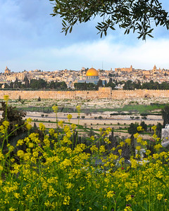 Jerusalem view from Mount of Olives with yellow mustard flowers