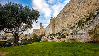 Olive tree and the Tower of David