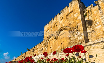 Red poppies, national flower of Israel, by the Jerusalem Gold en Gate